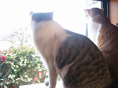 外を眺める兄妹猫