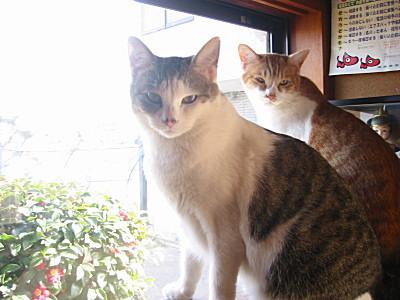 訴えかける猫たち