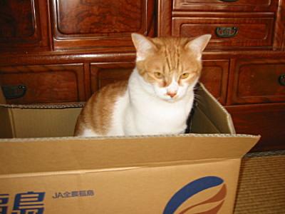 ダンボール箱に入るneko、ロイ