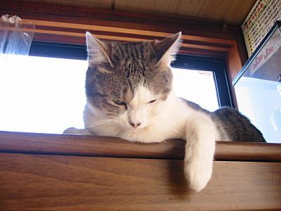 うらやましそうに見る猫、モモ