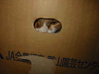 見つからないよう隠れるねこ、ロイ