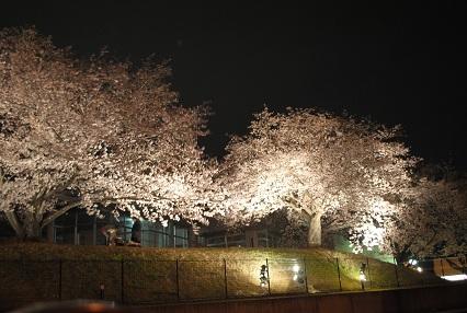 120402桜09