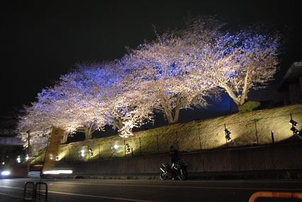120402桜10