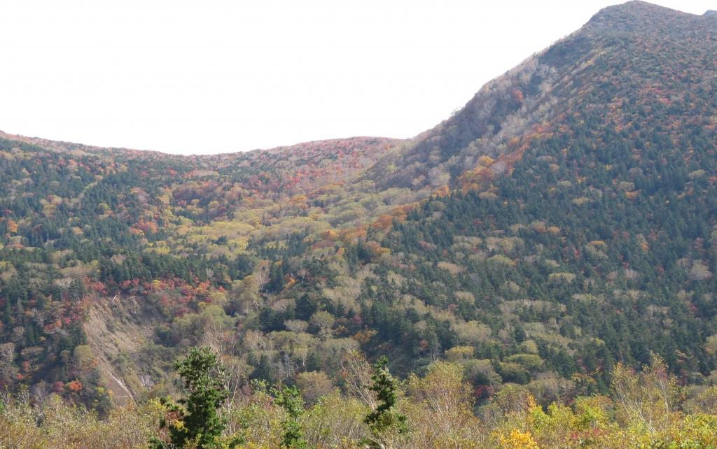 烏帽子岳の紅葉