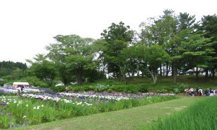 多賀城跡アヤメ祭り