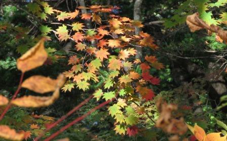 月山池紅葉