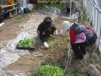 おーぷん里庭 2010年3月 苗植え