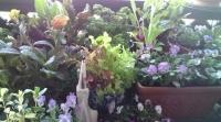 葉もの野菜と小花テーブル