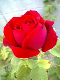 08-05-08_08-07.jpg