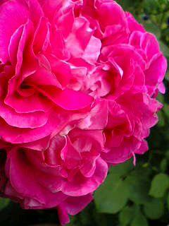 08-05-08_08-09.jpg