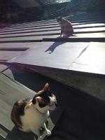 屋根の上の猫たち