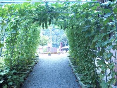 緑のトンネル完成