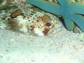 沖縄の魚た