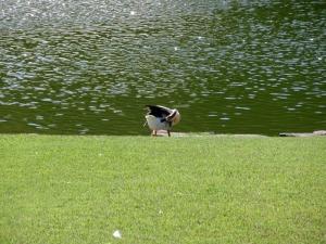 川村記念美術館 鳥1