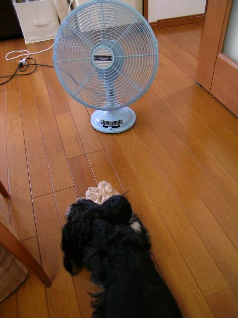 モコと扇風機