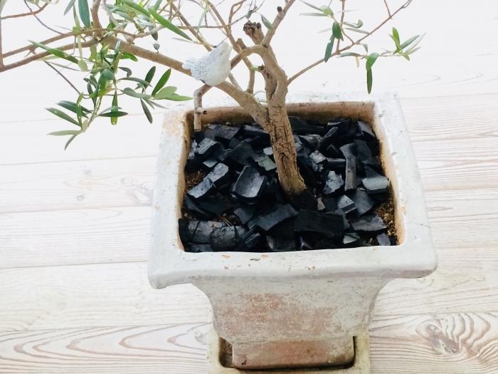 竹炭の使い方