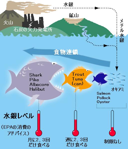 魚の食物連鎖