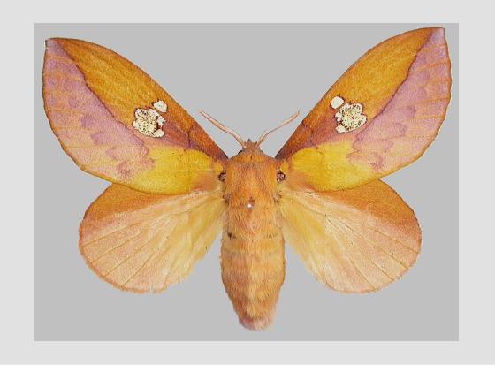 タケヒメカレハの標本