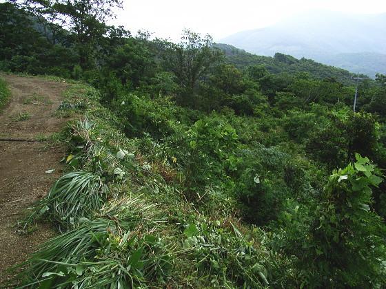 ホシチャバネセセリの生得環境