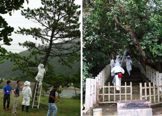 ツマアカスズメバチの巣の駆除