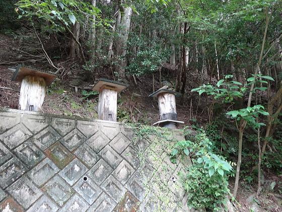 大星林道の蜂洞