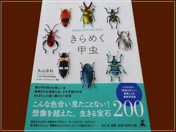 きらめく甲虫