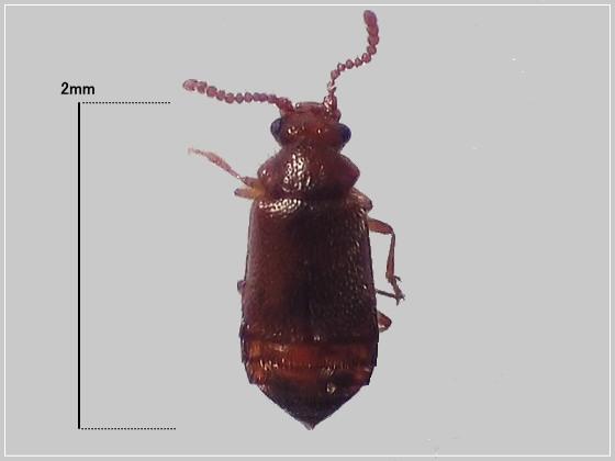 ミリ虫-18