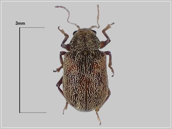 ミリ虫-22 カサハラハムシの仲間?