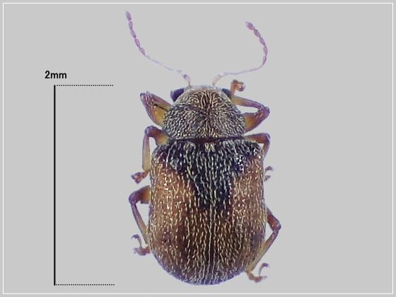 ミリ虫-24 ハムシの一種?