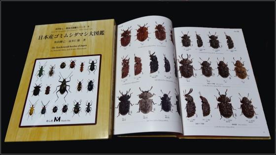 日本産ゴミムシダマシ大図鑑