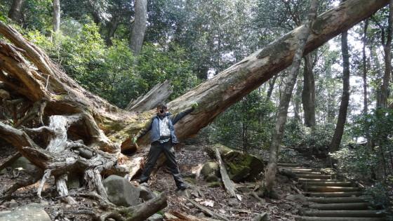 林内の倒木