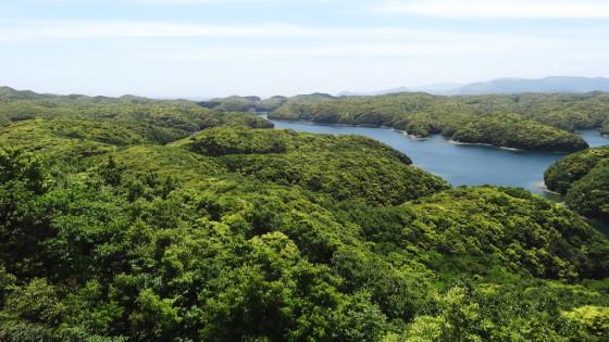 新緑の浅茅湾