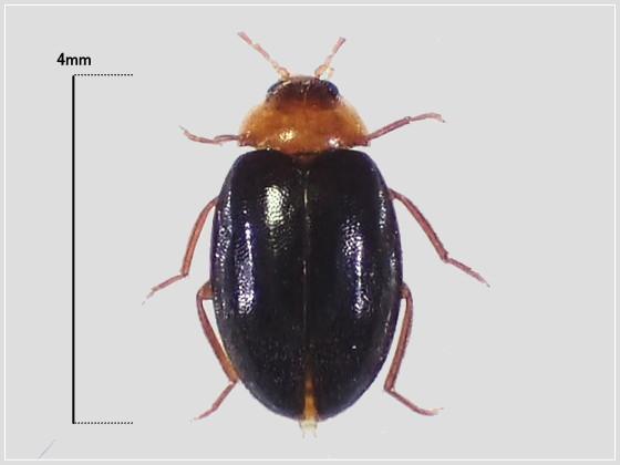 ミリ虫-37