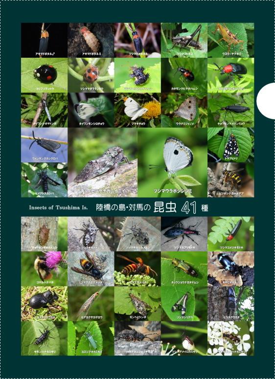 クリアファイル 陸橋の島・対馬の昆虫41種