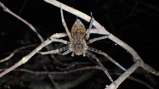 竜良山山麓のクモ