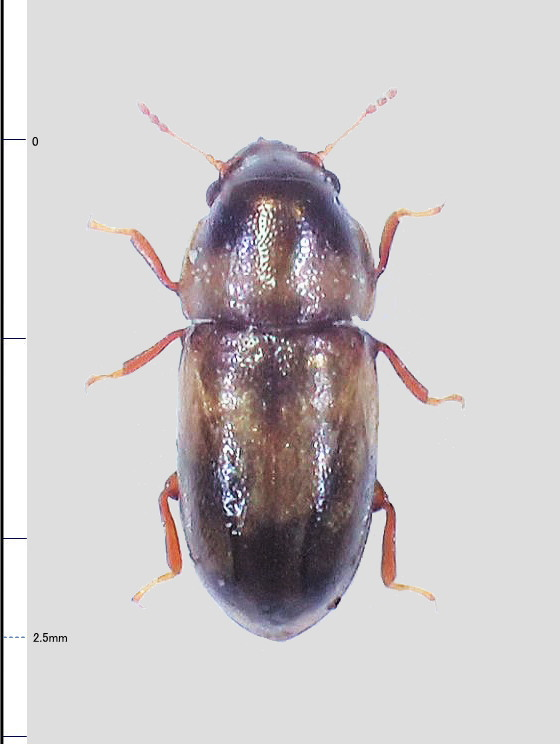 ミリ虫-80