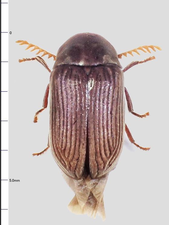 ミリ虫-81