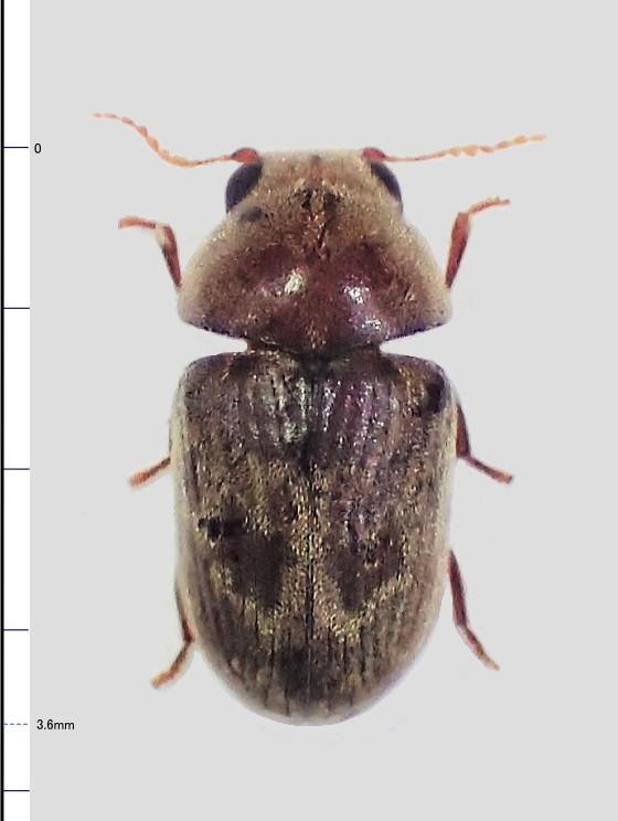 ミリ虫-83
