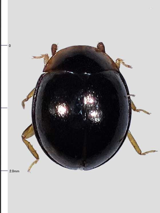 ミリ虫-86
