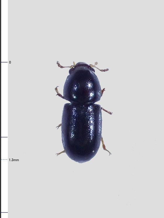 ミリ虫-88