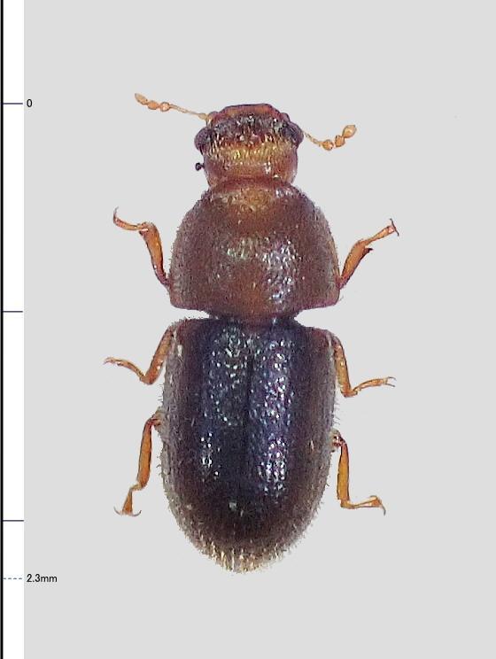ミリ虫-89