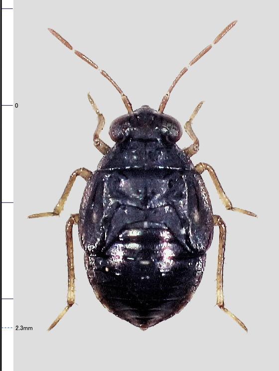 ミリ虫-95 微小カメムシ