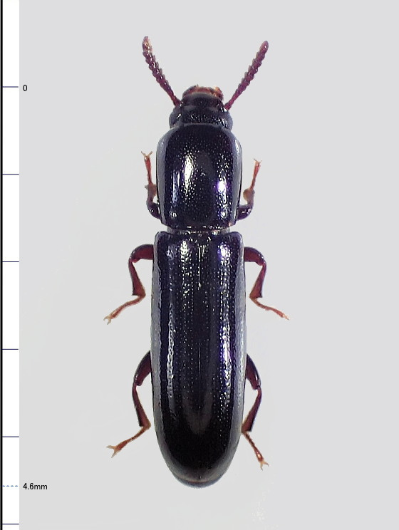 ミリ虫-97