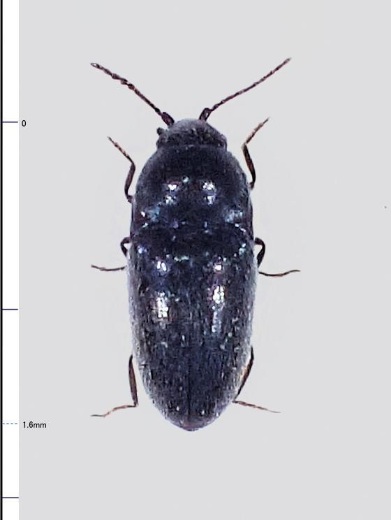 ミリ虫-100