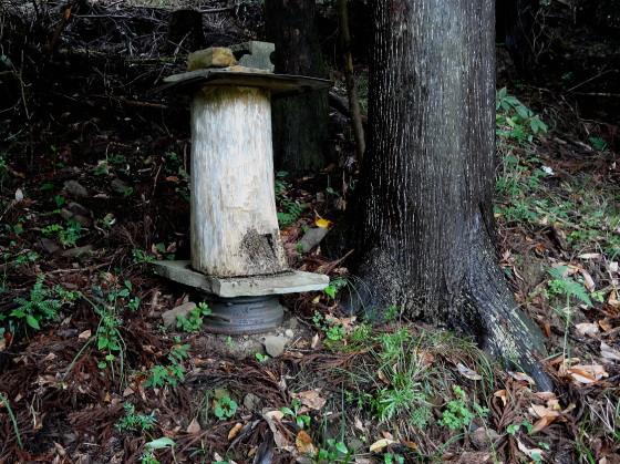 ニホンミツバチの蜂洞