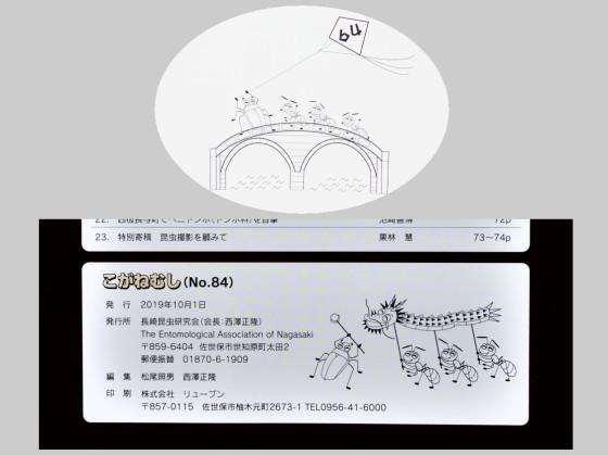 「こがねむし」No.84