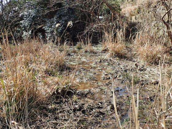 ツシマアカガエルの産卵環境