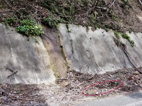 タイリクシジミガムシの生息環境
