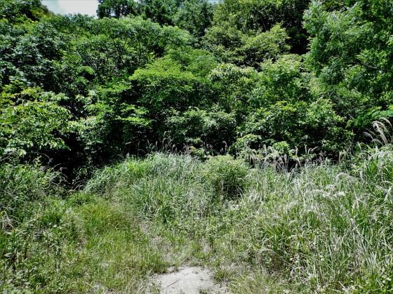 ホシチャバネセセリの生息環境