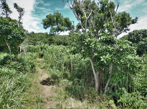 アヤムナビロタマムシの生息環境